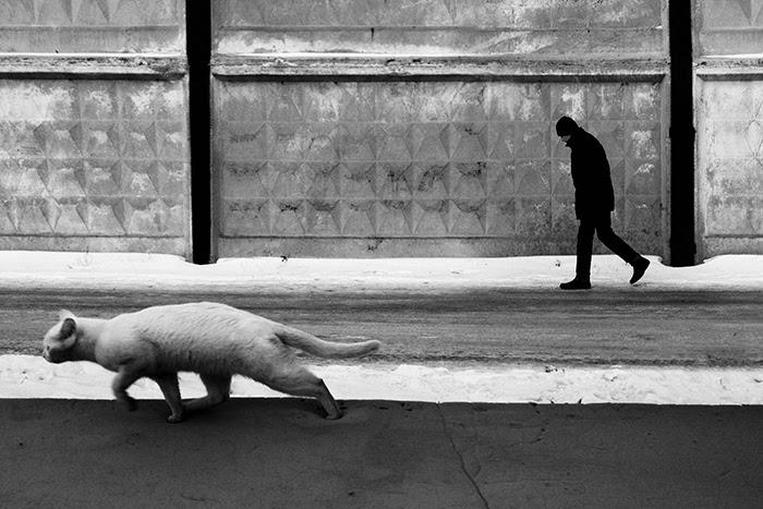 Ο κρυφός κόσμος των αδέσποτων γατών του Καζακστάν γάτες Γάτα αδέσποτες γάτες