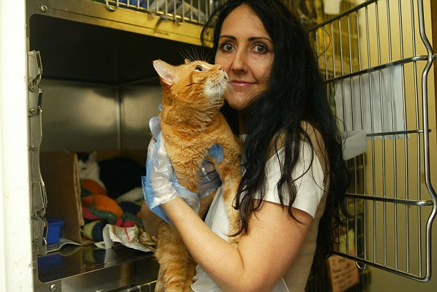 Liz Jones at a cat shelter in Canning Town, London. She claims her (ex) boyfriend 'kidnapped' her cat Prudence