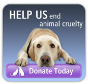ASPCA-ning-donate