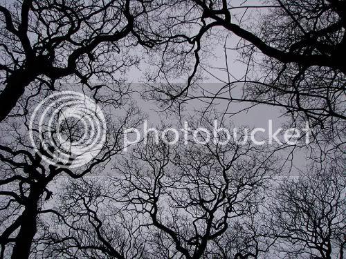 photo skywatch.jpg