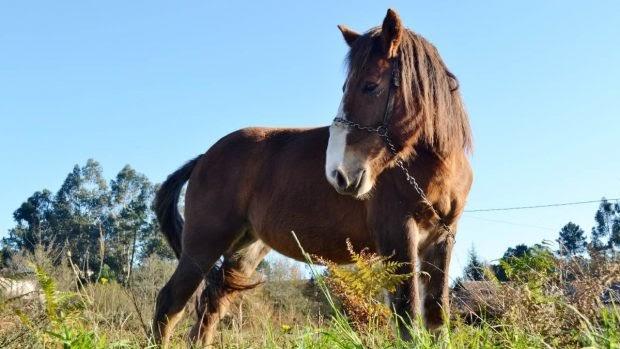 5 tips para adoptar un caballo