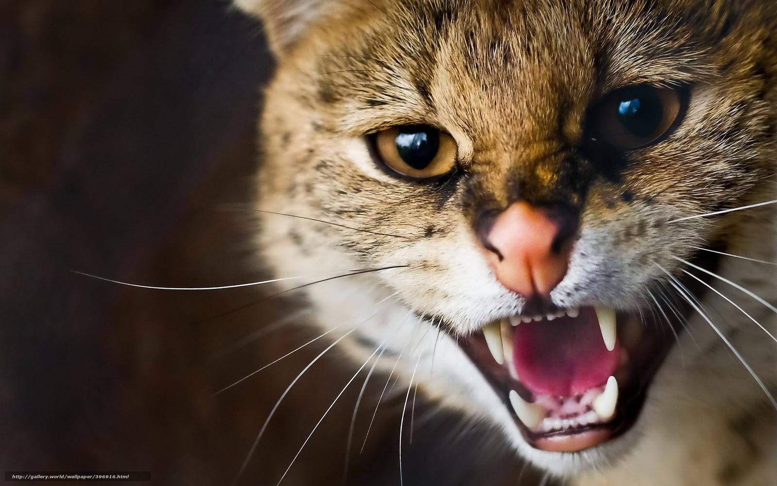 壁紙をダウンロード サーバル 山猫 スナウト 口ひげ デスクトップの