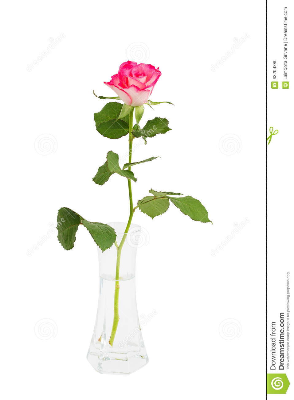 Single red rose in vase isolated on black. | Red rose ... |Tall Pink Roses Single