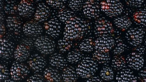 tasty blackberries hd wallpaper wallpaperfx