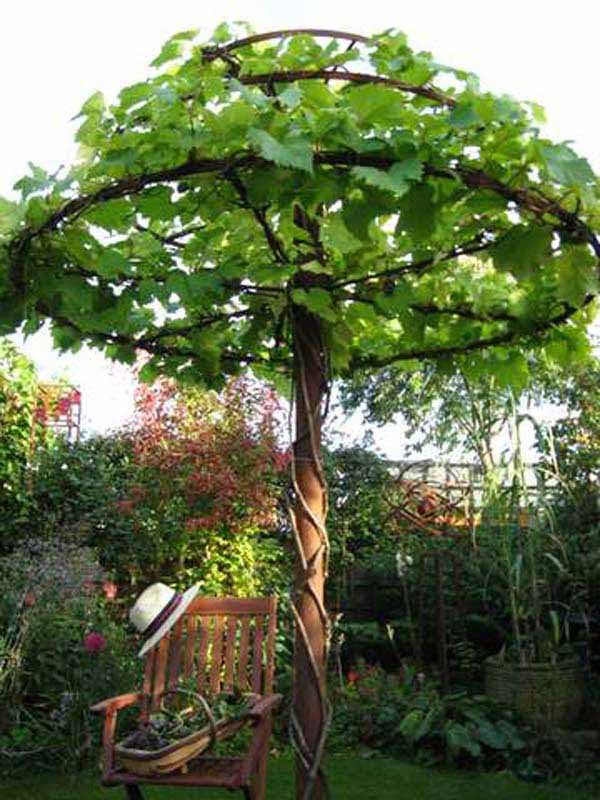 DIY-Backyard-Pergola-WooHome-9