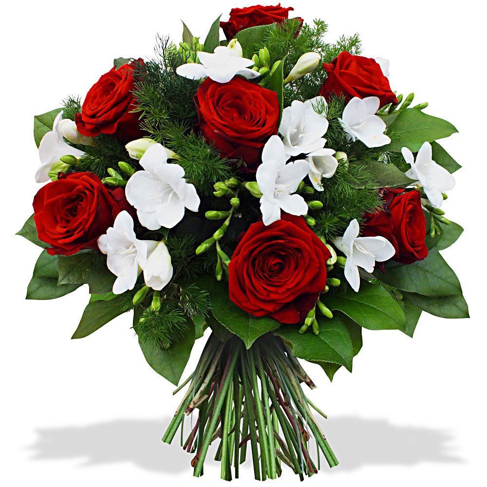 Galería De Imágenes Rosas Rojas