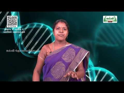 8th Science வளரிளம் பருவமடைதல் அலகு20 பகுதி1 Kalvi TV