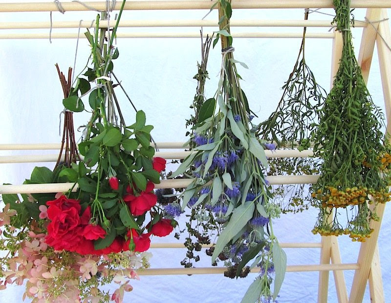 Dry Your Flowers For Year Round Enjoyment Anthony Tesselaar Plants