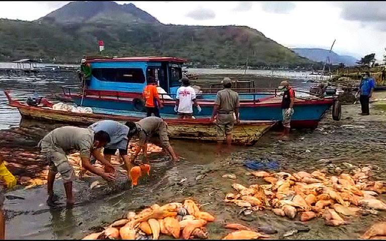 λίμνη toba ψάρια πεθαίνουν από τον Αύγουστο του 2018, λίμνη toba ψάρια πεθαίνουν από τον Αύγουστο του 2018 βίντεο, λίμνη toba ψάρια πεθαίνουν-αύγουστος 2018 εικόνες