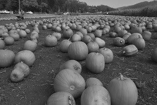 HMB Pumpkin Fest - Repetto Pumpkins