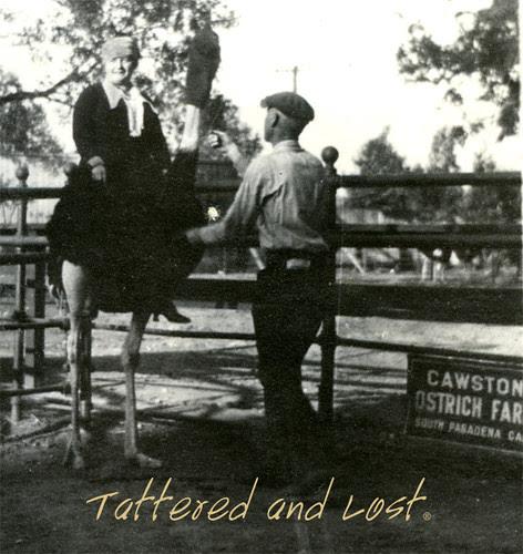 cawston_ostrich_farm_closeup_tatteredandlost