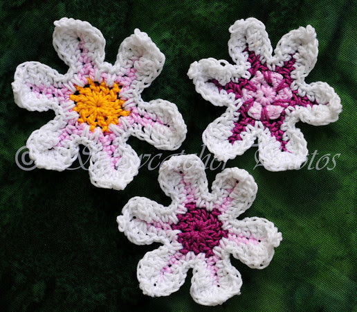 Picotee Flowers