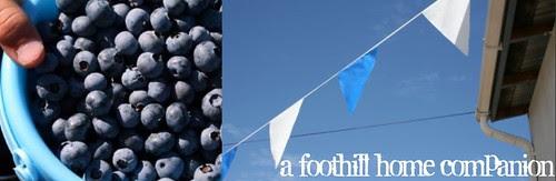 blueberry header