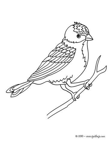 Dibujos Para Colorear Pajaro Carpintero Eshellokidscom