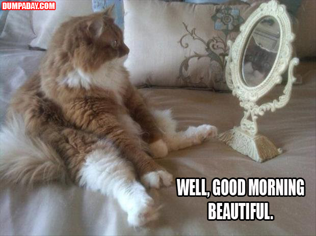 Funny Animals With Quotes Gallery Ebaums World