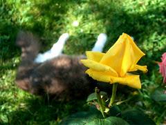 Miss Cat Flower's yellow mood