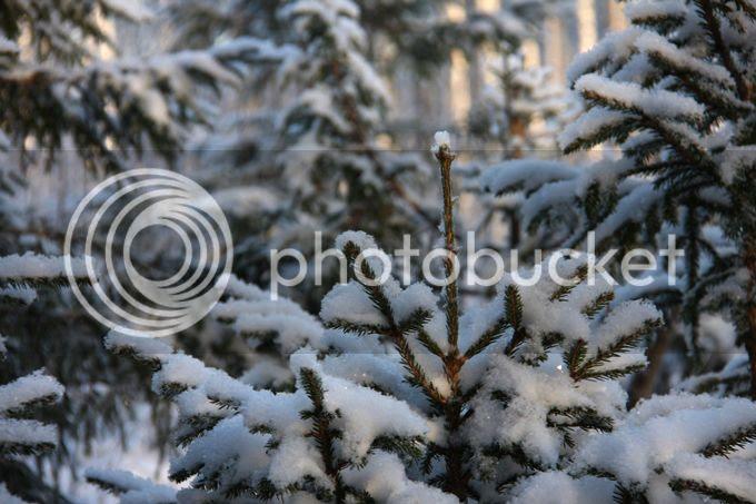 photo TALVI211_zps348d75f6.jpg