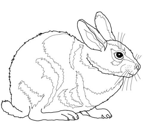 eastern cottontail rabbit coloring page  free printable coloring pages