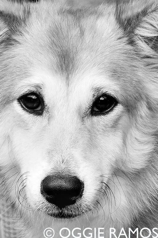 Nature's Original - Brown Dog Portrait II