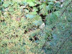 Looking up YR warbler