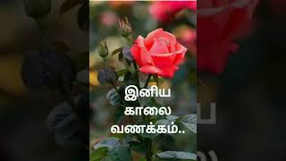 Kalai Vanakkam Song Mp4 Hd Video Download Loadmp4com