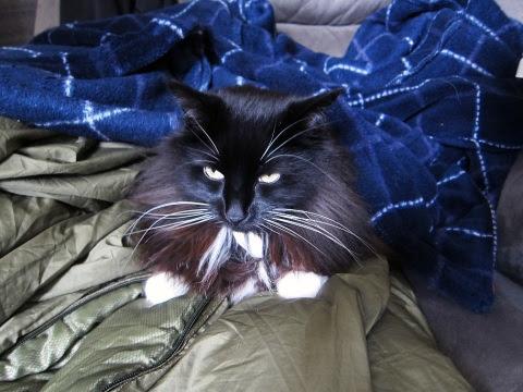 cosy-paws-cat