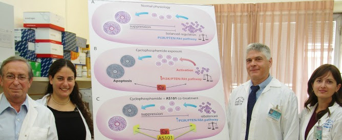 From left, Prof. Benjamin Sredni, Lital Kalich-Philosoph, Prof. Dror Meirow and Dr. Hadassa Roness with a diagram of what happens in the ovaries during chemo combined with AS101. Photo courtesy of Sheba Medical Center