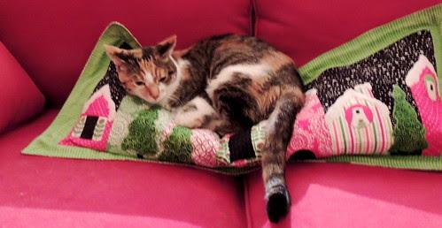 Grace Enjoys the Holiday Lane pillow
