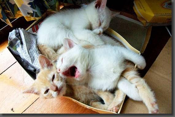 zevalice17 Gambar Anak Kucing Menguap dengan Sangat Comel