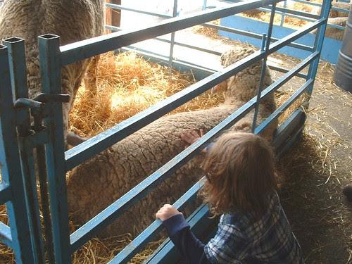 NY sheep and wool 2013 3