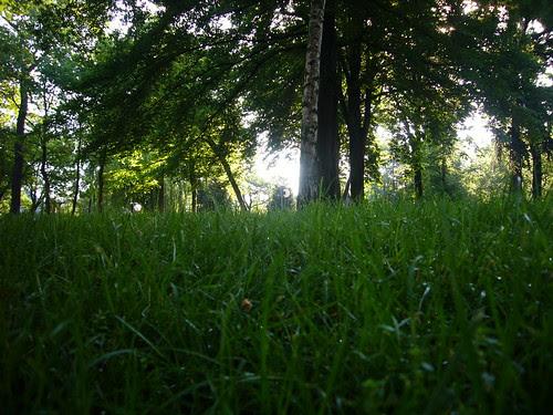 Quelle Forêt ?