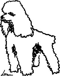 Line Drawing of a Poodle
