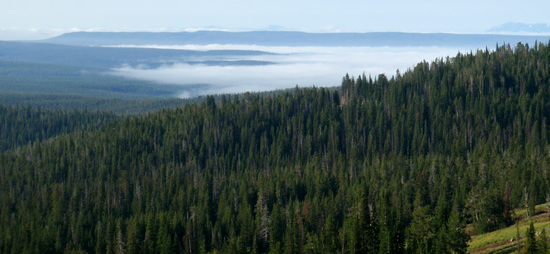 Morning fog blanketing the Canyon Village area of Yellowstone National Park.