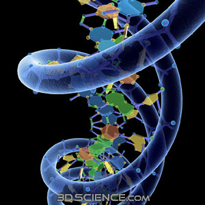 http://www.3dscience.com/img/Products/3D_Models/Biology/DNA/DNA_w_Phosphate_structure/Supporting_images/3d_model_DNA_w_phosphate_1.jpg