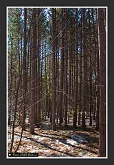 Baird Trail-8