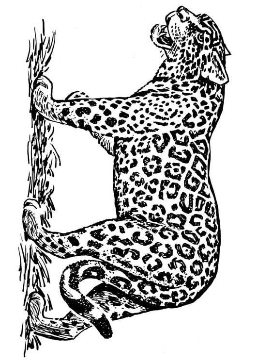 ausmalbilder jaguar  calendar june
