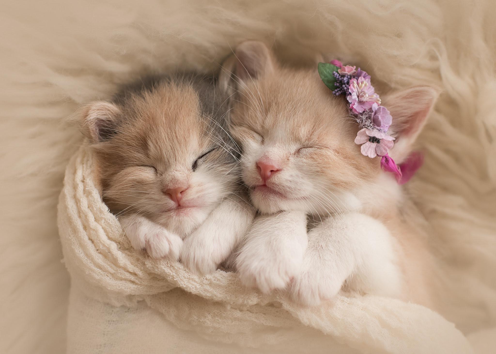 Wallpaper Cute Kucing Comel Kucingcomel Com