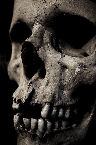 File:Skullclose.jpg