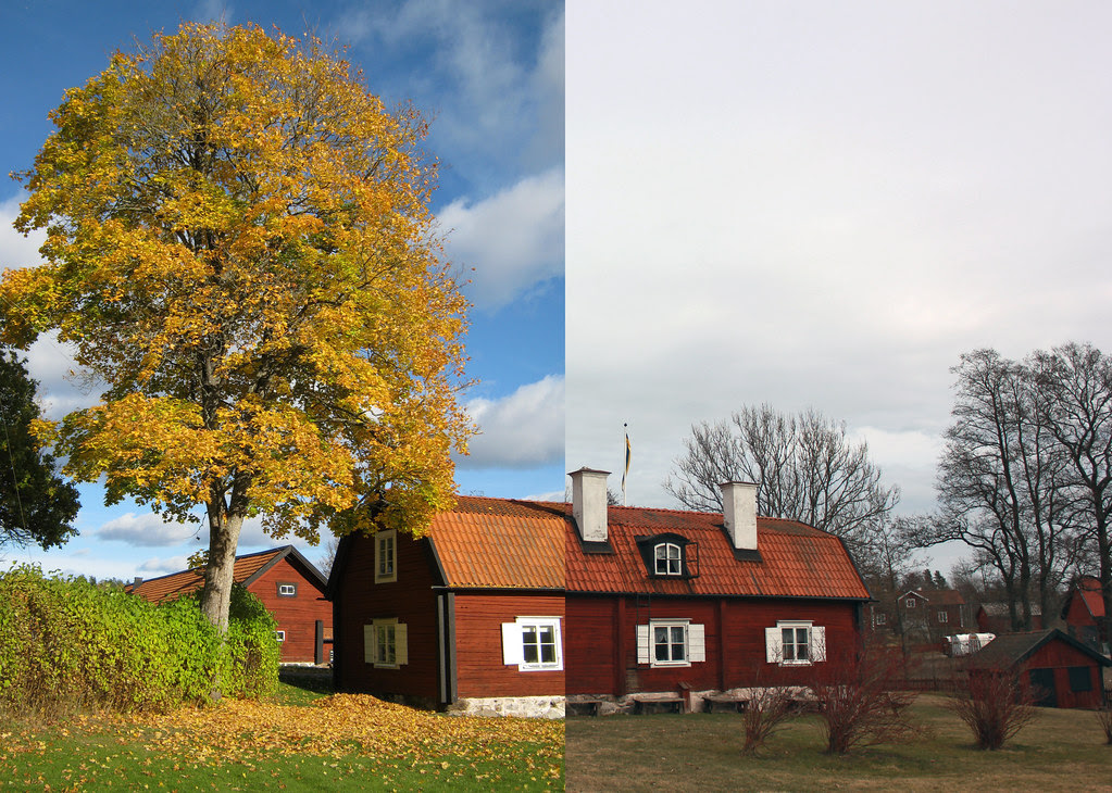 Autumn Vs. Spring