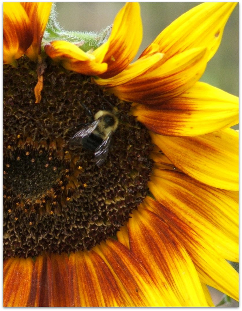 by Angie Ouellette-Tower for http://www.godsgrowinggarden.com/ photo DSCF9065_zpsflybq9wi.jpg