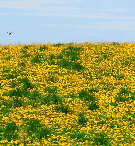 golden hilltop