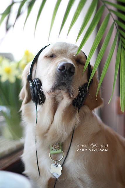 redwingjohnny:  jjones186:  (via Beauty in Everything - Photography) ♪ ♫ ♪  …….he's listening to snoop :)