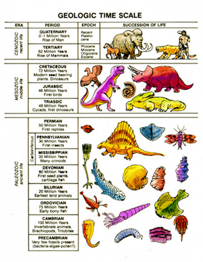 geologic time scale eras. Table of geologic time
