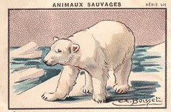 milliat animaux005