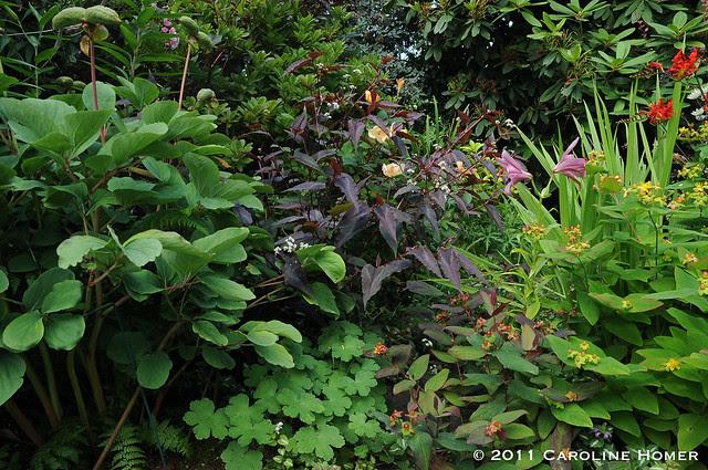 Lush plantings abound