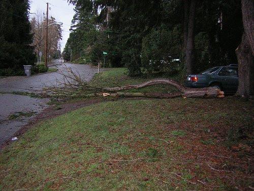 Dec 2006 Winter Storm Damage