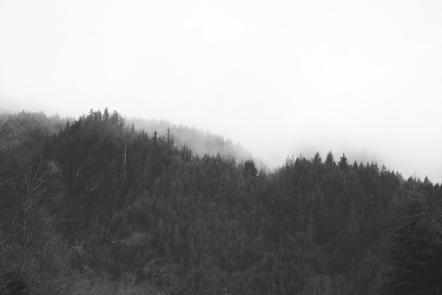 there is nothing I love more than fog and evergreens