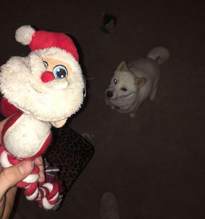 Cadela apaixonada por boneco do Papai Noel é levada para conhecer o bom velhinho e tem reação incrível