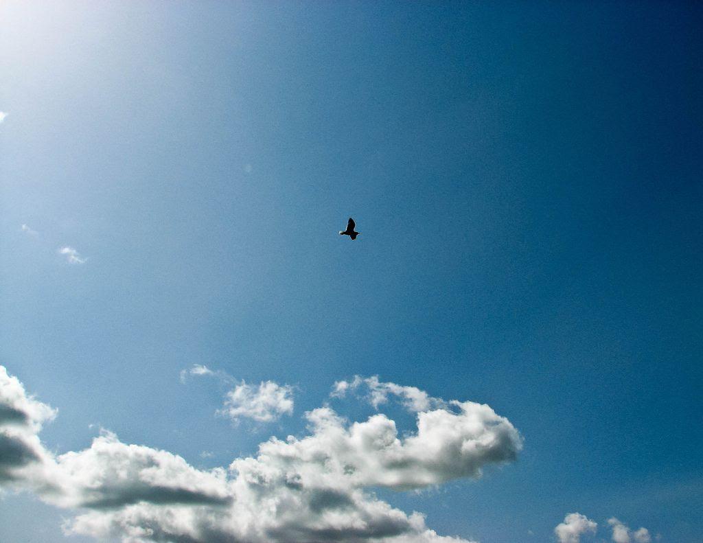 sky,bird