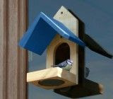 Bird Feeder which sticks to a window is great for elderly people who cannot access their garden freely